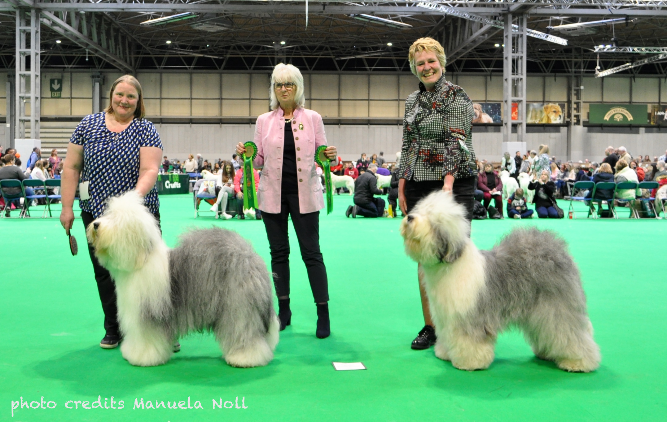 2020 crufts CC copy